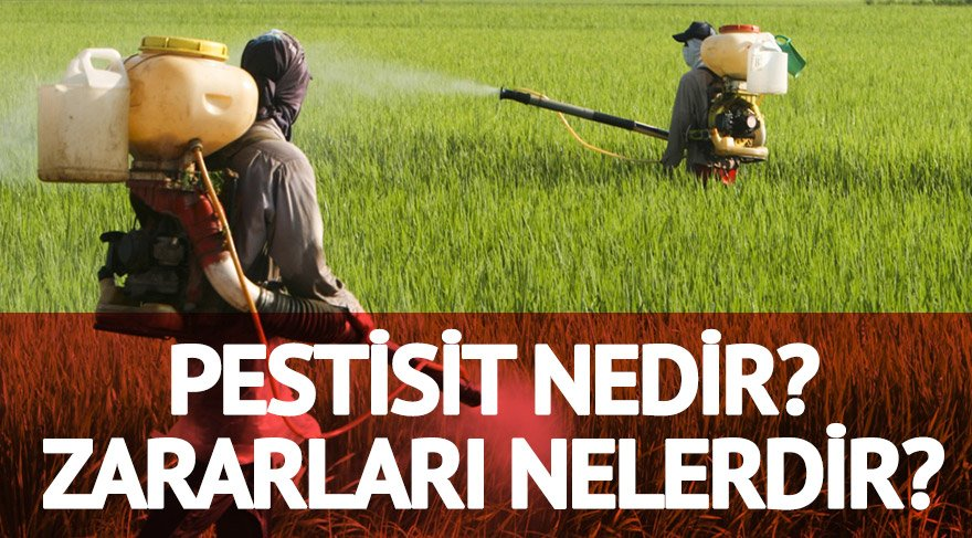 pestisit nedir zararları nelerdir